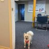 Mocha at office